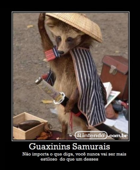 guaxinin