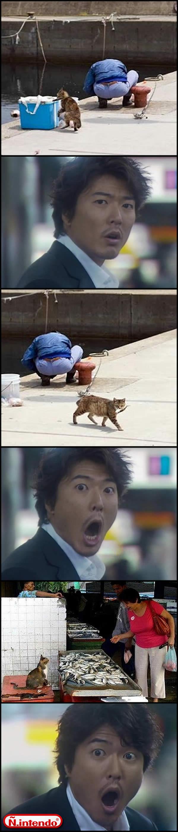 Gato Malandro