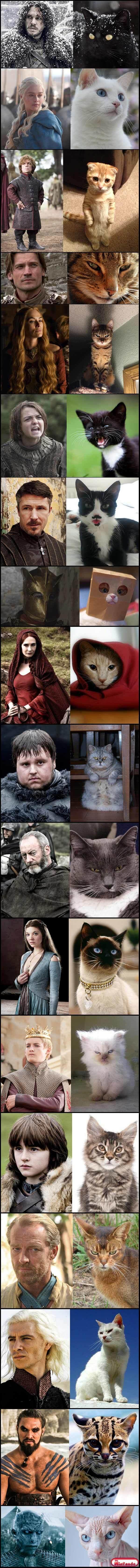 E Se Game Of Thrones Fosse Encenado Por Gatos?